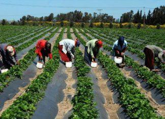 Une structure évoluant dans le domaine agricole